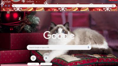 cat new year holidays