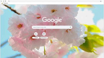 flores Chrome Themes - ThemeBeta